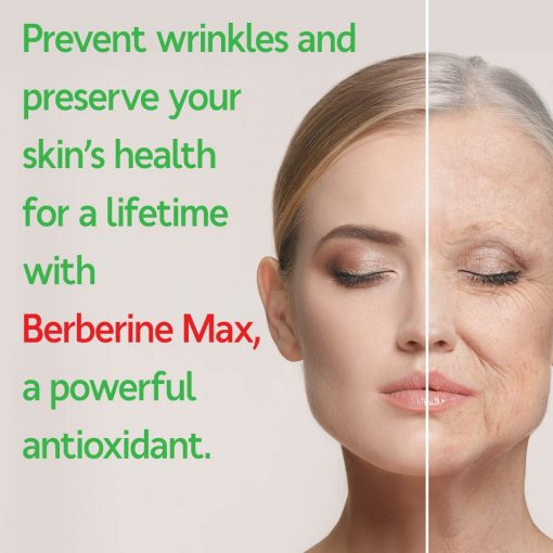 Berberine Protects From Aging and Oxidation